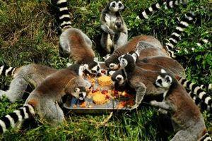 Động vật cũng 'đè đầu cưỡi cổ' tranh nhau... ăn bánh Trung thu