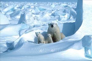 Thông điệp 'không im lặng' vì khí hậu