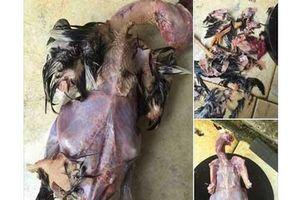 'Cười không nhặt được mồm' với cách làm thịt gà bá đạo của nàng dâu 'khéo tay nhất Vịnh Bắc Bộ'