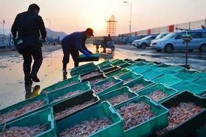 Trung Quốc phát hiện nCoV trên gói hàng thủy sản nhập khẩu