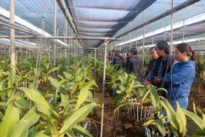 Mô hình trồng hoa lan ứng dụng công nghệ cao
