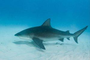 Người phụ nữ mang thai lao xuống biển cứu chồng bị cá mập tấn công