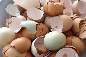 Công dụng tuyệt vời của vỏ trứng mà nhiều gia đình không biết
