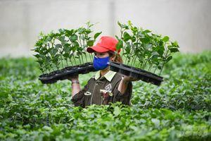 Tổng giám đốc Nafoods Group: 'Không nên đánh thuế nông sản ở thời điểm này'