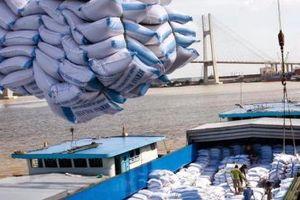 Chất lượng gạo Việt ngày càng được nâng cao