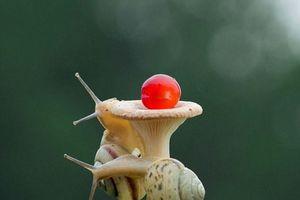 Hình ảnh ốc sên đua leo cây nấm siêu ngộ nghĩnh