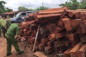 Bắt giam đối tượng bán gỗ lậu 'khủng' cho Doanh nghiệp tư nhân Hùng Ny