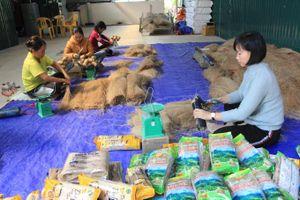 Cây trồng cứu cánh của đồng bào dân tộc tỉnh Cao Bằng