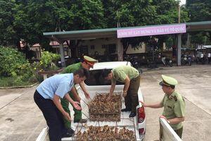 Lạng Sơn: Tăng cường ngăn chặn gia cầm nhập lậu qua biên giới