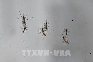 Dịch sốt Chikungunya lây lan rộng tại Campuchia