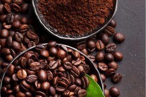 Tháng 8/2020, Giá xuất khẩu cà phê đạt mức cao nhất kể từ đầu năm 2019