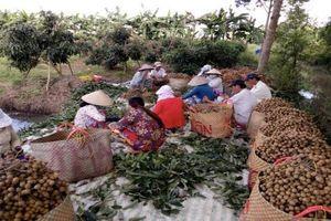 Quỹ hỗ trợ nông dân: Điểm tựa tài chính vững chắc cho nông dân Cần Thơ