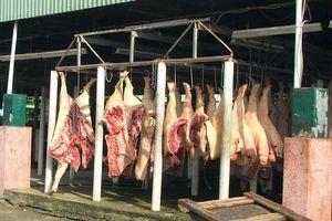 TP.HCM 'đại phẫu' công tác giết mổ gia súc, gia cầm