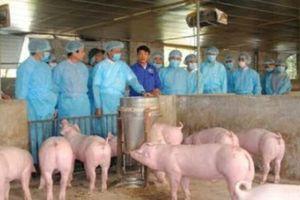 Nghệ An: Nguy cơ bùng phát dịch bệnh trên gia súc, gia cầm
