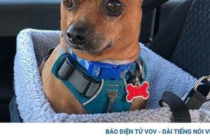 Ngắm những mẫu ghế dành cho cún cưng trên xe hơi