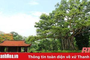 Cây di sản ở Lam Kinh