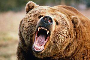Nghệ sĩ huấn luyện thú bị gấu dữ giết chết vì lí do khó hiểu