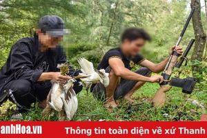 Thanh Hóa ngăn chặn tình trạng 'tận diệt' chim trời