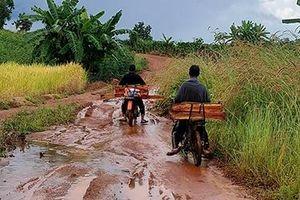Rừng Mang Yang bị 'xẻ thịt' dù nằm gần 2 chốt bảo vệ rừng