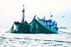 Tăng cường ngăn chặn khai thác thủy sản tận diệt