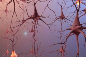Thuốc trị rối loạn tim làm giảm cơn buồn ngủ trong bệnh Parkinson