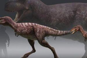 Cuộc đời của khủng long bạo chúa được chia thành 21 giai đoạn, hai trong số đó cực kỳ quan trọng và giúp chúng trở nên to lớn
