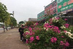 Cổ Linh-phố hoa mới của Hà Nội