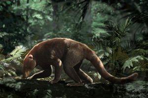 Tổ tiên động vật có vú sống lâu hơn 'con cháu' thời hiện đại