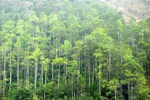Toàn tỉnh Khánh Hòa trồng mới hơn 566ha rừng