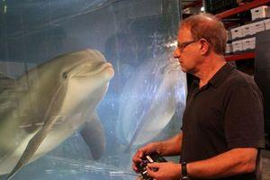 Robot sẽ thay thế cá heo hoang dã trong tương lai