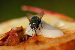 Mách bạn độc chiêu khiến bọn ruồi 'dạt nhà' đi luôn, cả đời không dám quay lại