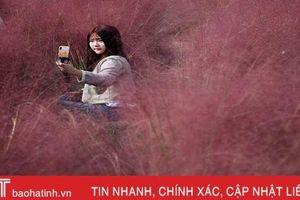 Đồng cỏ hồng lãng mạn, hút khách tham quan ở Hàn Quốc