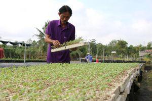 Nhiều giống hoa, kiểng mới phục vụ thị trường Tết Nguyên đán 2021