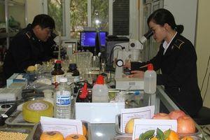 Từ 17/10, không yêu cầu nộp bản giấy Giấy chứng nhận kiểm dịch thực vật nhập khẩu