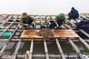Quảng Ninh: Đẩy mạnh tiêu thụ mặt hàng hải sản trên địa bàn tỉnh