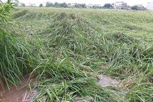 Nam Định: Gần 12 nghìn ha lúa mùa và cây vụ đông bị ảnh hưởng do bão số 7