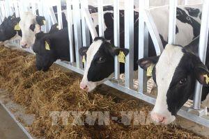 Chiến lược phát triển chăn nuôi: Lấy thị trường xuất khẩu làm động lực