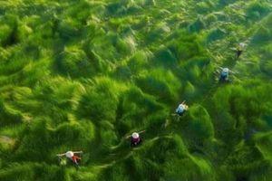 Giải thưởng nhiếp ảnh trên không 2020: Việt Nam có 4 giải nhiếp ảnh