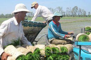 Kinh tế nông nghiệp Đồng Tháp phát triển theo chiều sâu