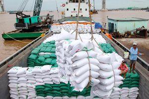 Giá gạo xuất khẩu của Việt Nam tăng 12,4%
