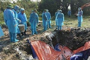 Hà Nội tiêu hủy 157 con lợn mắc bệnh dịch tả lợn châu Phi