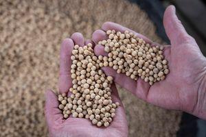 Brazil quyết định bỏ thuế nhập khẩu đối với đậu tương và ngô