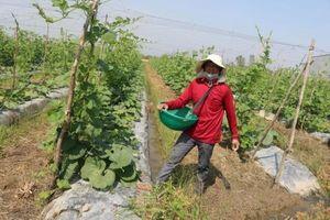 Chủ động nguồn nước cho sản xuất nông nghiệp