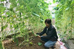 Đan Phượng phát triển nông nghiệp công nghệ cao