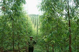 51,5 triệu USD hỗ trợ bảo vệ, phát triển rừng vùng Bắc Trung bộ