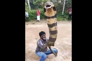 Rùng mình cảnh thanh niên 'dụ' rắn hổ mang chúa khổng lồ ra đường, dùng tay không bắt sống