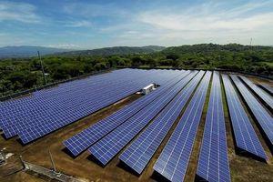 Bình Định xin chuyển gần 29ha rừng để làm nhà máy điện mặt trời Phù Mỹ 3 hơn 2.000 tỷ