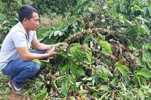 Truy tìm kẻ chặt hơn 200 cây của người dân