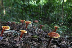 Vào xem 'ngọc' mọc trong rừng