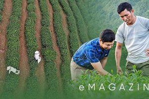 Mười năm gieo 'vàng xanh', nông dân Lai Châu làm nên những quả đồi triệu USD
